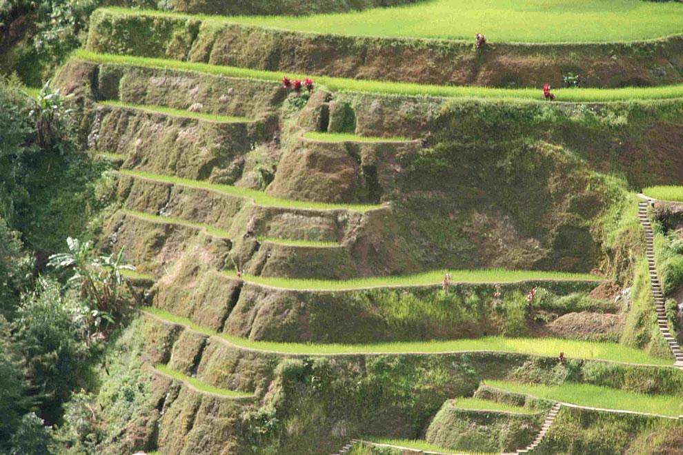 Terrazzamenti per le colture di riso   Elettraprodan\'s Blog