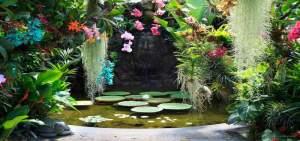 fontana-negombo